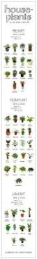 how much light does your houseplant need find out on this handy