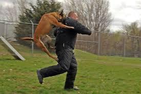 belgian shepherd north carolina statute of limitations for dog bites in north carolina brent