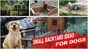 backyards ergonomic backyard landscaping for dogs best backyard
