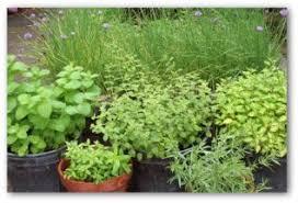 Summer Garden Ideas - summer vegetable garden planning tips pictures and ideas