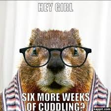 Groundhog Meme - groundhog day lol 10 photos majorgeeks