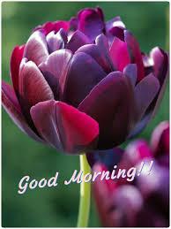 blumen lila pin von anoop patel auf good morning pinterest
