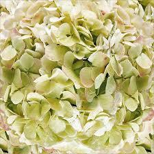 sams club wedding flowers 18 best rachie s flowers images on stems hydrangea
