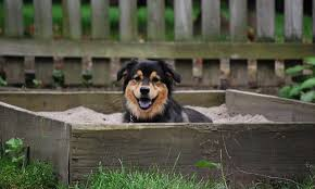 Can You Bury A Dog In Your Backyard 7 Tips To Stop Your Dog From Digging Up The Yard Rover Com