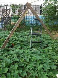 Growing Melons On A Trellis Food Justice Alliance The George Washington University And The