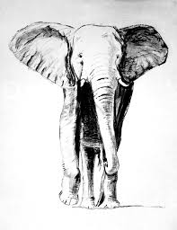free photo elephant drawing carbon pencil free image on