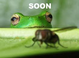 Soon Meme - soon funny meme funny memes