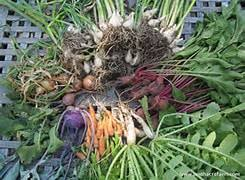 how do you store your root vegetables for the winter becky u0027s