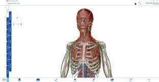 Human Anatomy Atlas Download U2013 3d Human Anatomy Atlas Visible Body De Graça é Mais