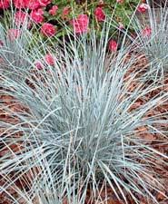 planting and fertilizing ornamental grasses