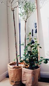 hall ikea olivträd ficus hm home ernst mariez instagram