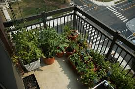 photo of balcony vegetable garden balcony vegetable garden