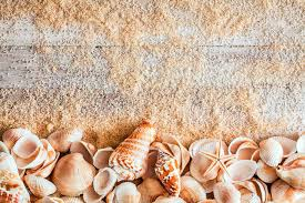 assorted seashells border of assorted seashells including a cone bivalves conch