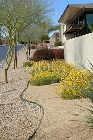 living green in the desert garden ramblings from a desert garden