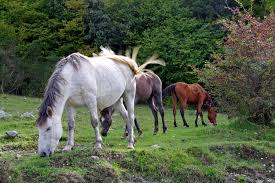 three assorted color horses free image peakpx