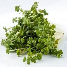 wasabi mustard everythinggreen widest range of gmo free non hybrid microgreen