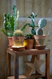 Indoor Plants Arrangement Ideas by 425 Best Table Top Potted Plants Images On Pinterest Potted