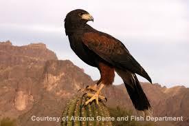 native plants in arizona arizona habitats the arizona experience landscapes people