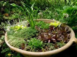 Dish Garden Ideas Dish Garden Containers Ideas Home Inspirations