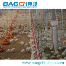 broiler poultry shed design broiler poultry shed design suppliers