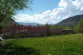 فصل الربيع Images?q=tbn:ANd9GcSLn9bTWQs2ZJ5e_QYmRxrlmodele5PfHJCvQk5KeNTf31Yk8tk
