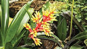 ornamental house plants saturday magazine the guardian nigeria