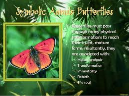 the butterfly meaning butterfly meaning symbolic and spiritual