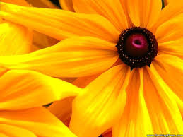 desktop wallpapers flowers backgrounds big yellow flower www