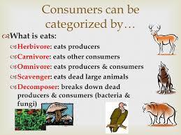 carnivore herbivore omnivore animals worksheet the best and most