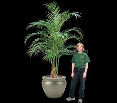 artificial butterfly palm trees silk palm trees faux butterfly