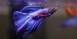 Okeanos Aquascaping Aquarium Colorology How Custom Purple Aquascapes Can Add A Touch