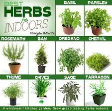 indoor herb gardens garden tech support plant detectives and indoor herb gardens