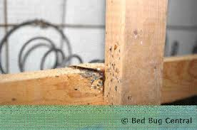 Mattress Cover Bed Bugs Bed Bugs 101 Mattress And Box Spring Encasements Bedbug Central