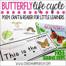 butterfly life cycle freebie one sharp bunch