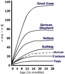 australian shepherd size chart french bulldog puppy growth chart akc french bulldog puppies for