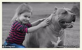 american pitbull terrier puppies louisiana 2014 dog bite fatality family pit bull kills 4 year old in