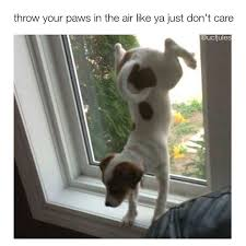 Funniest Animal Memes - 23 super funny animal memes you die laughing