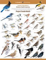Florida Backyard Birds - identifying birds feederwatch