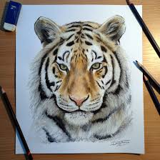 colorful tiger drawing
