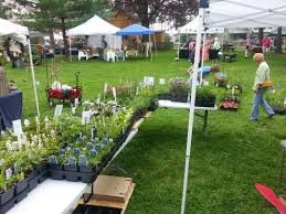 native plants maryland plant sale events welcome to meadowsweet native plant farm