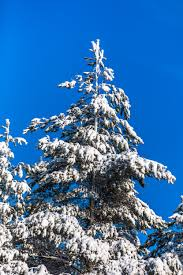 free images branch mountain snow winter sky flower frost