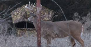 Reflective Deer Blind Ground Blind Buying Guide And Tips Military Hunting And Fishing
