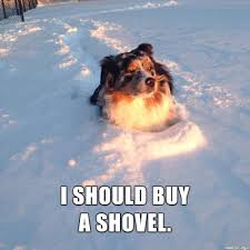 Shovel Meme - contemplative dog meme on imgur