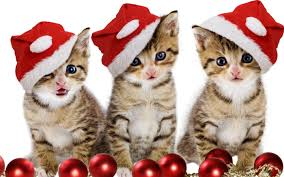 we wish you a merry greetings cards messages