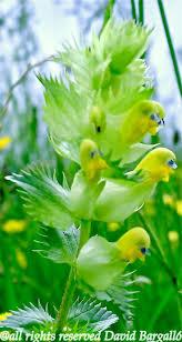 3600 best unusual plants u0026 flowers images on pinterest plants