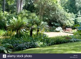 Tropische Pflanzen Im Garten Bäume U0026 Pflanzen In Sub Tropischen Garten Stockfoto Bild
