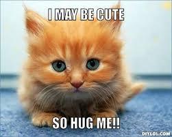 Cat Hug Meme - download cute cat meme generator super grove