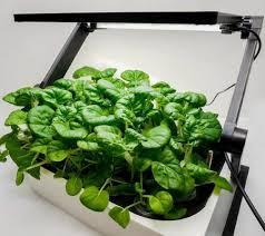 growing herbs indoors under lights how indoor plants grow under light