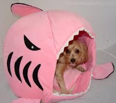 house dogs shark attack sharkweek yourdesignerdog