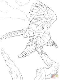 realistic turkey vulture coloring page free printable coloring pages